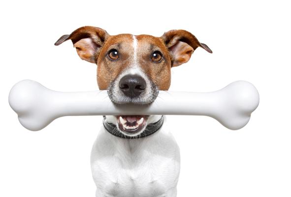 dog-bone